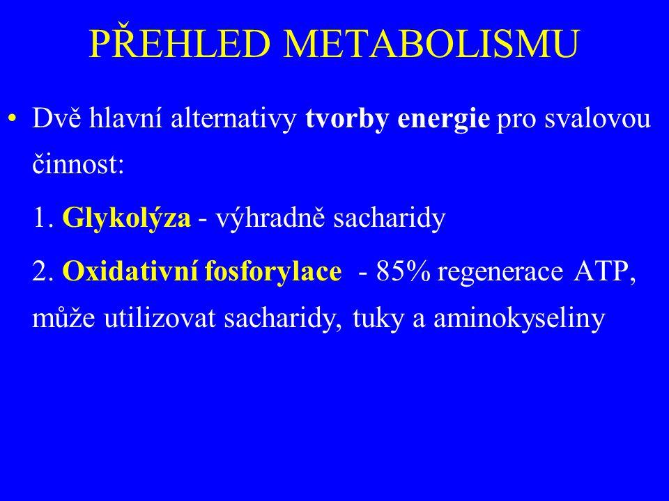 PŘEHLED METABOLISMU Dvě hlavní alternativy tvorby energie pro svalovou činnost: 1. Glykolýza - výhradně sacharidy.