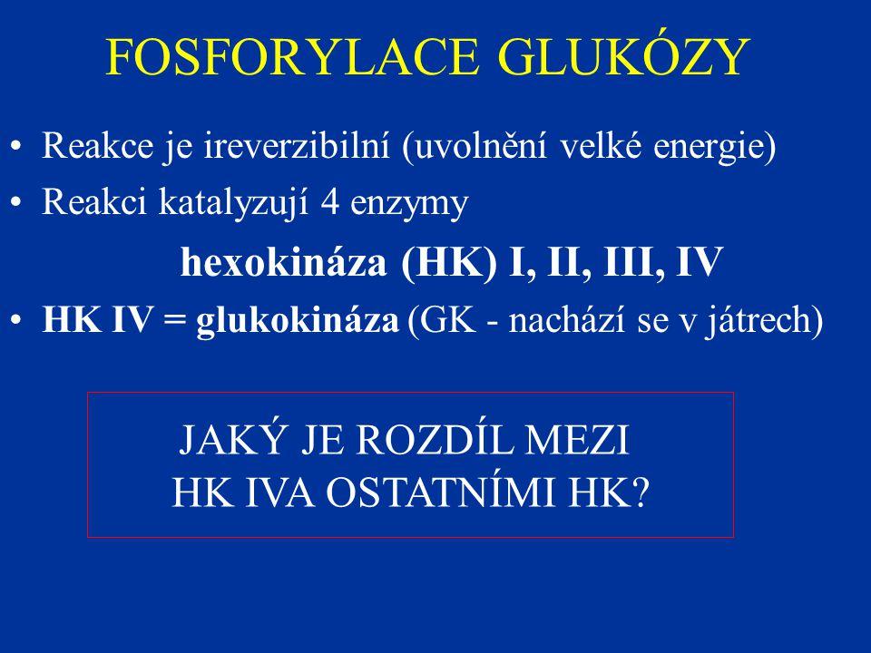 hexokináza (HK) I, II, III, IV