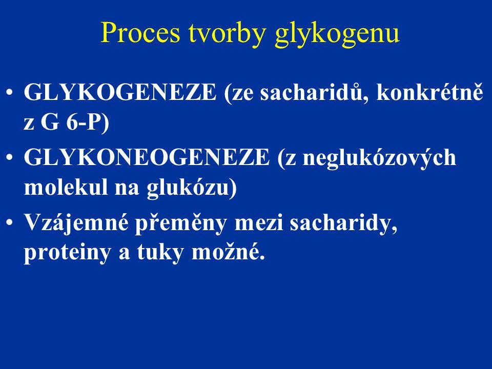 Proces tvorby glykogenu