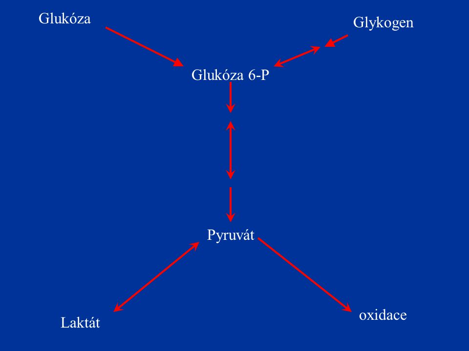 Glukóza Glykogen Glukóza 6-P Pyruvát oxidace Laktát