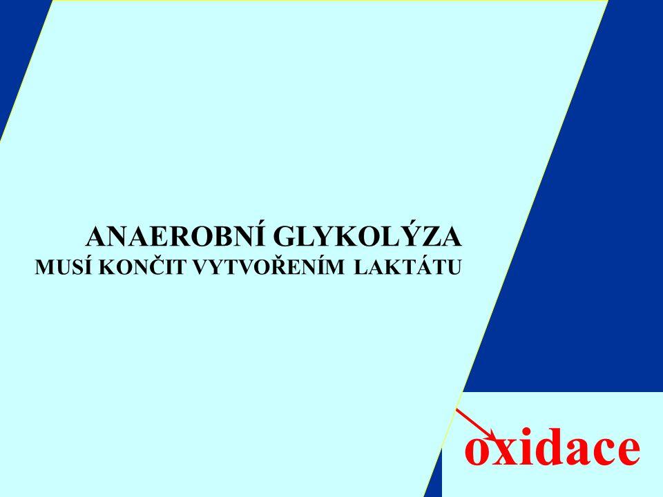 oxidace ANAEROBNÍ GLYKOLÝZA Glukóza Glykogen Glukóza 6-P