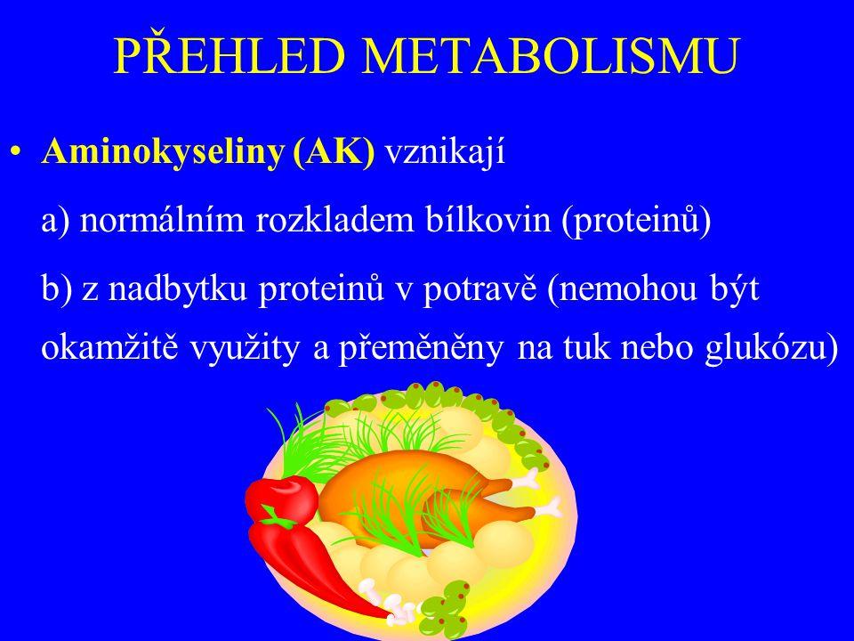 PŘEHLED METABOLISMU Aminokyseliny (AK) vznikají