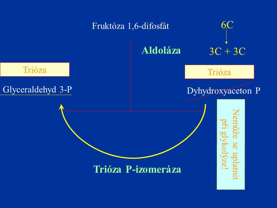 6C Aldoláza 3C + 3C Trióza P-izomeráza Fruktóza 1,6-difosfát Trióza