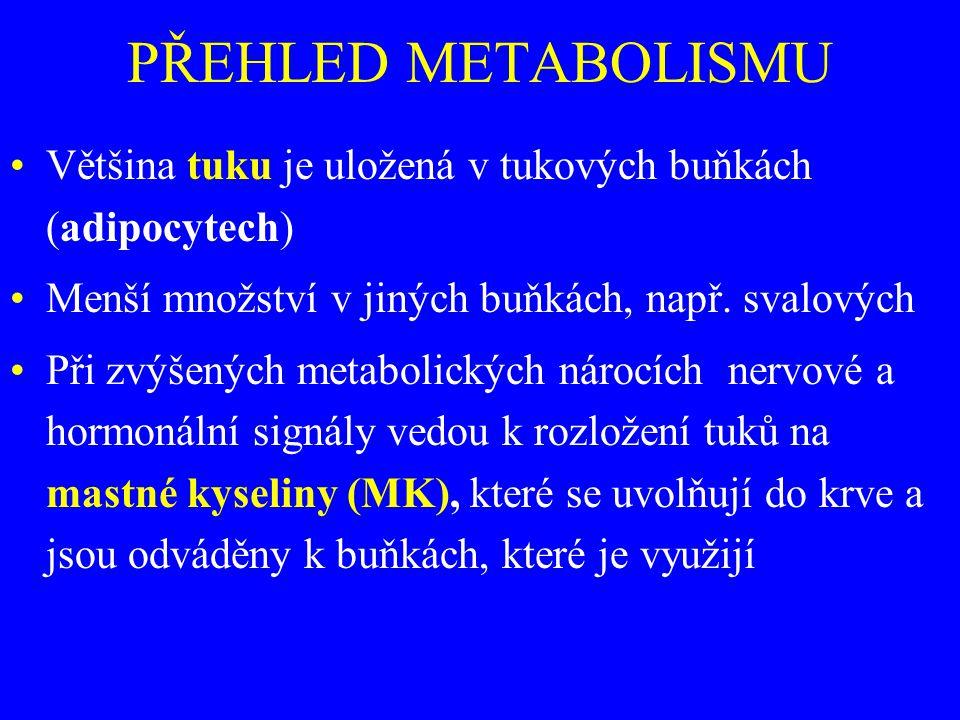 PŘEHLED METABOLISMU Většina tuku je uložená v tukových buňkách (adipocytech) Menší množství v jiných buňkách, např. svalových.
