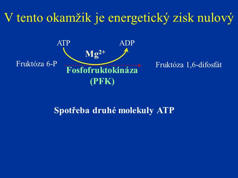Spotřeba druhé molekuly ATP