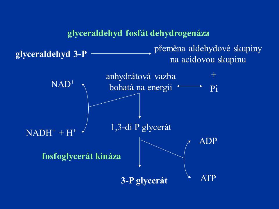 glyceraldehyd fosfát dehydrogenáza