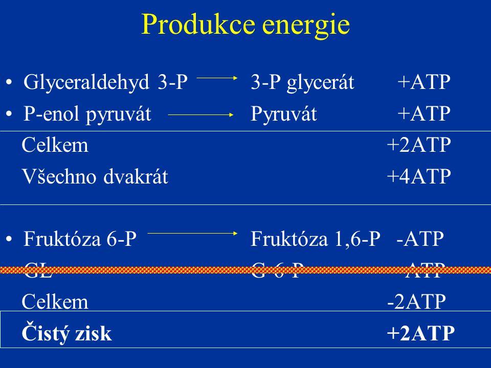 Produkce energie Glyceraldehyd 3-P 3-P glycerát +ATP