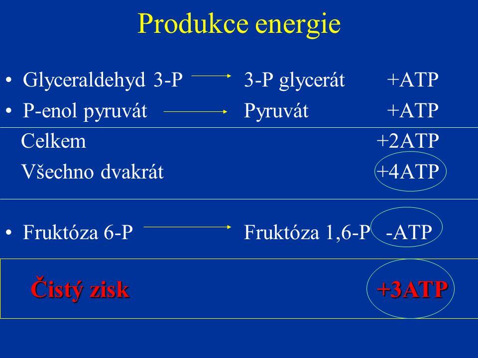 Produkce energie Čistý zisk +3ATP Glyceraldehyd 3-P 3-P glycerát +ATP