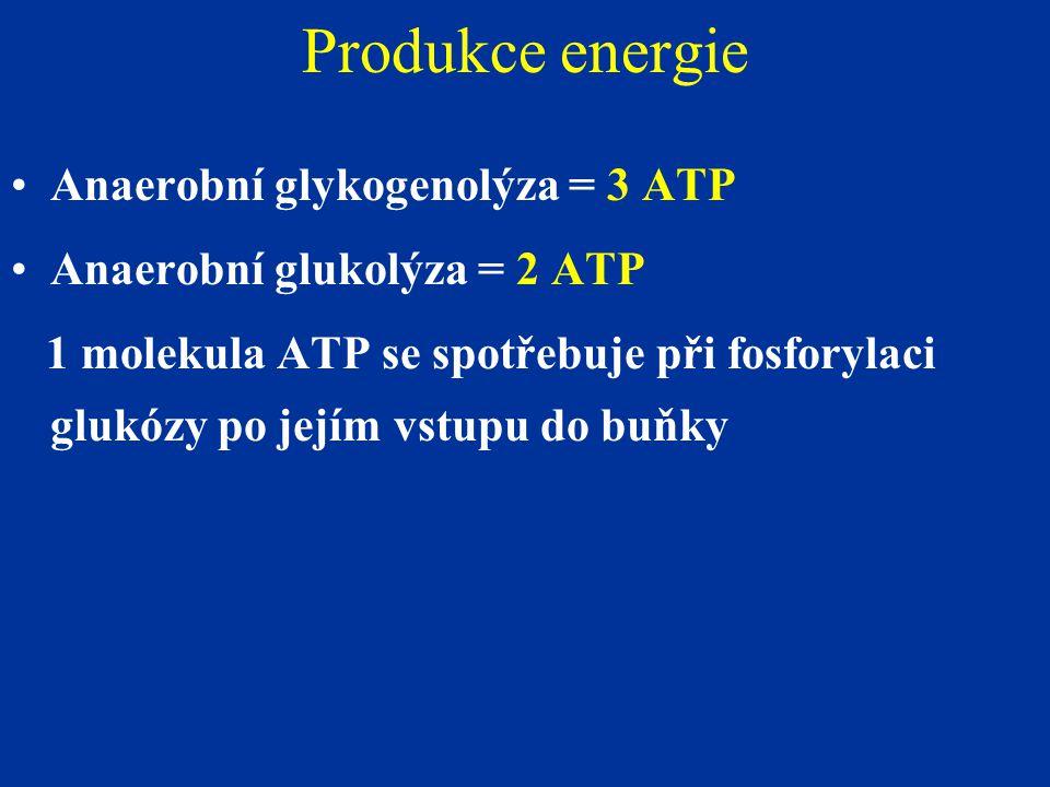 Produkce energie Anaerobní glykogenolýza = 3 ATP
