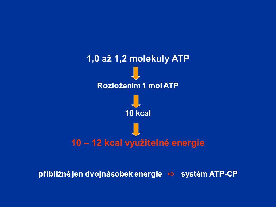 1,0 až 1,2 molekuly ATP 10 – 12 kcal využitelné energie