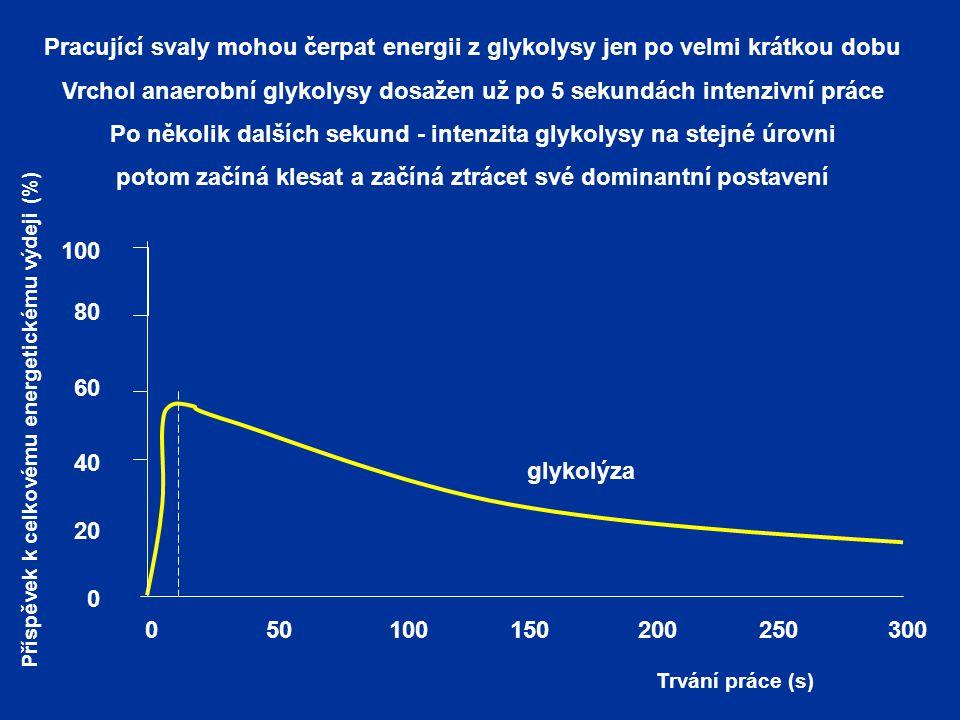 Vrchol anaerobní glykolysy dosažen už po 5 sekundách intenzivní práce