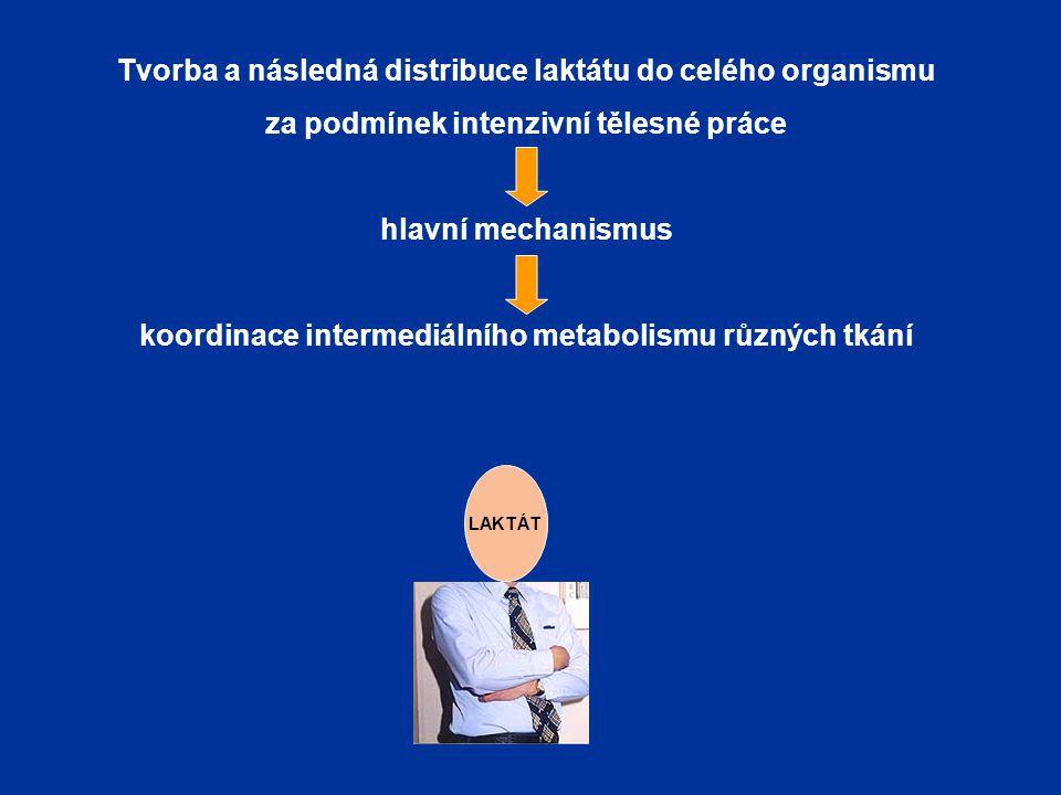 Tvorba a následná distribuce laktátu do celého organismu