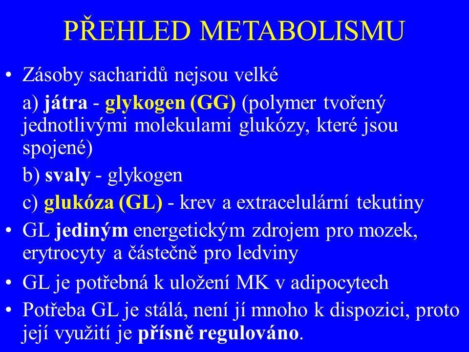 PŘEHLED METABOLISMU Zásoby sacharidů nejsou velké