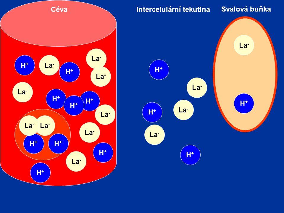 Intercelulární tekutina