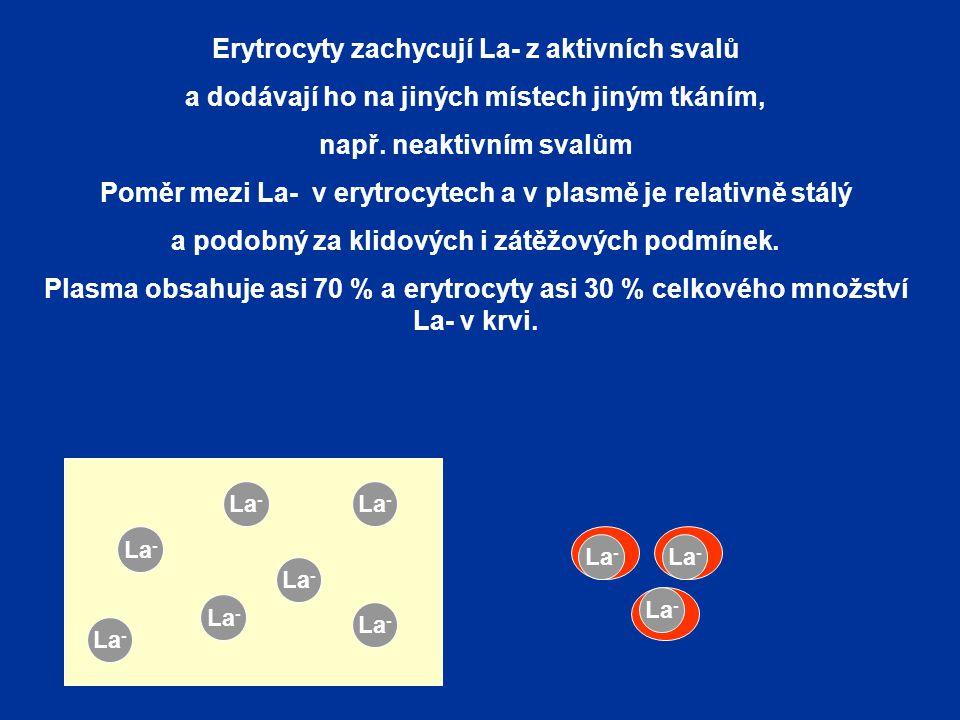 Erytrocyty zachycují La- z aktivních svalů