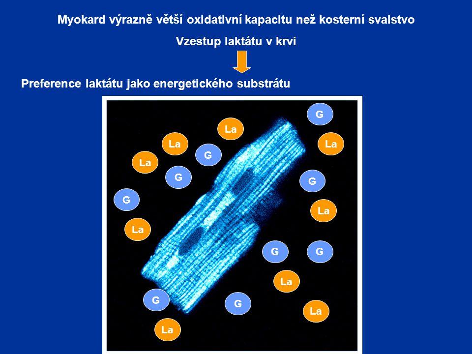 Myokard výrazně větší oxidativní kapacitu než kosterní svalstvo