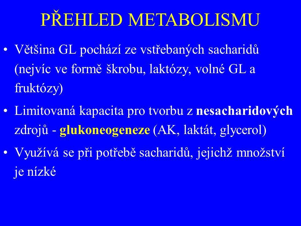 PŘEHLED METABOLISMU Většina GL pochází ze vstřebaných sacharidů (nejvíc ve formě škrobu, laktózy, volné GL a fruktózy)