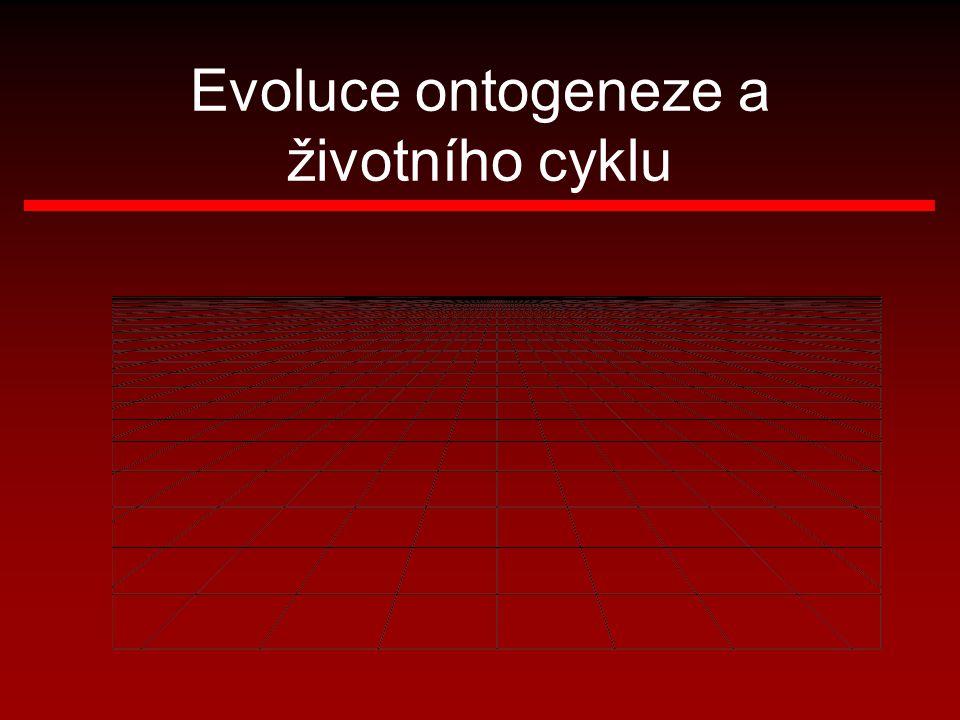 Evoluce ontogeneze a životního cyklu