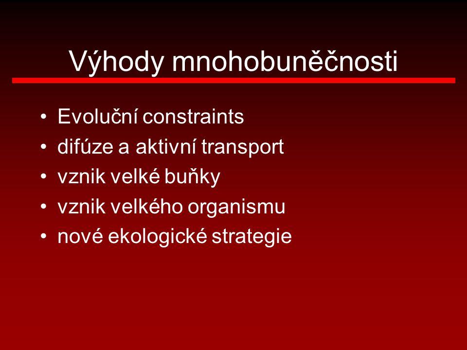 Výhody mnohobuněčnosti