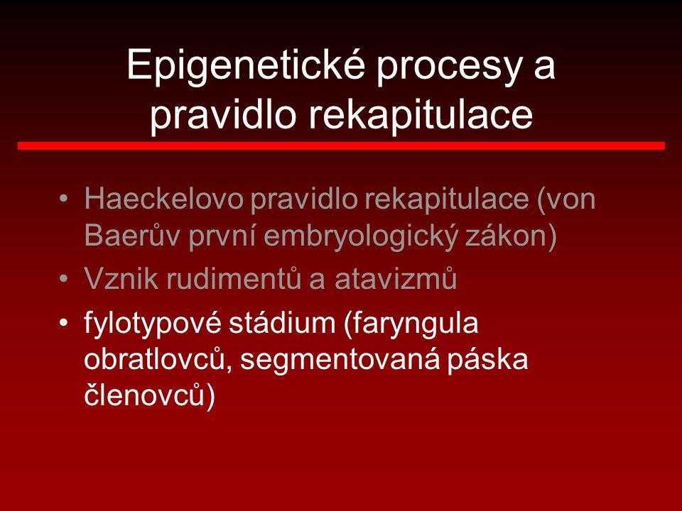 Epigenetické procesy a pravidlo rekapitulace