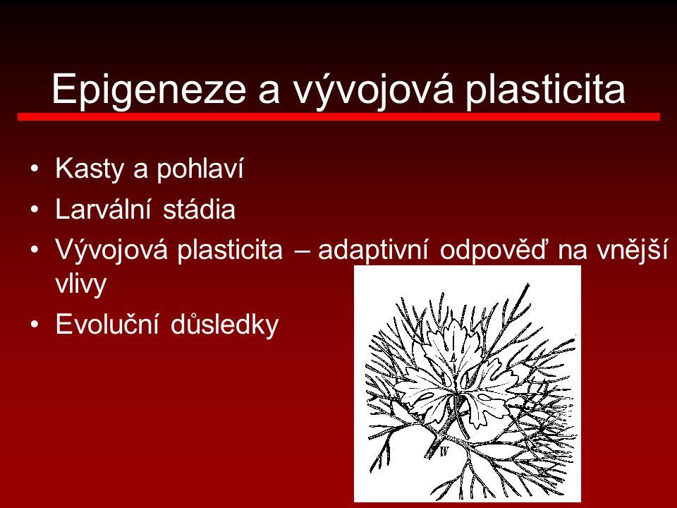Epigeneze a vývojová plasticita