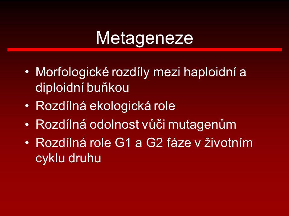 Metageneze Morfologické rozdíly mezi haploidní a diploidní buňkou