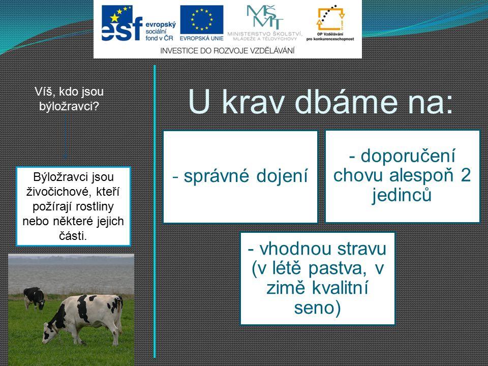 U krav dbáme na: - doporučení chovu alespoň 2 jedinců - správné dojení