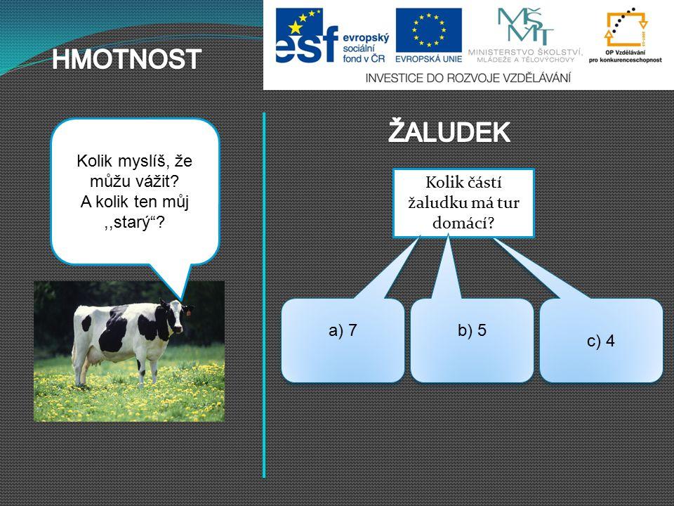 HMOTNOST ŽALUDEK Kráva může vážit 380 – 850 kg, býk i dvojnásobek.
