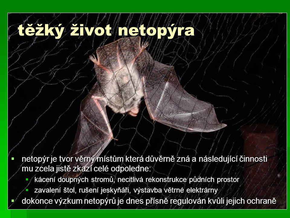 těžký život netopýra netopýr je tvor věrný místům která důvěrně zná a následující činnosti mu zcela jistě zkazí celé odpoledne: