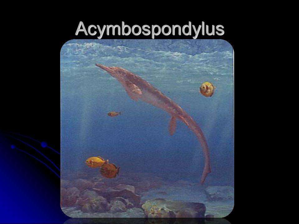 Acymbospondylus