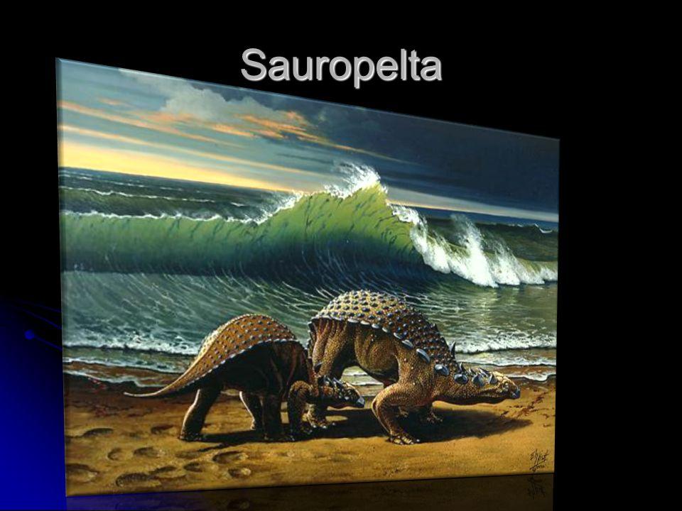 Sauropelta