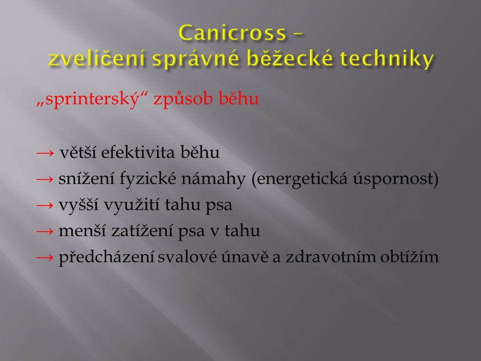 Canicross – zveličení správné běžecké techniky