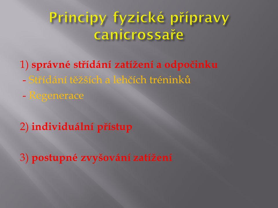 Principy fyzické přípravy canicrossaře
