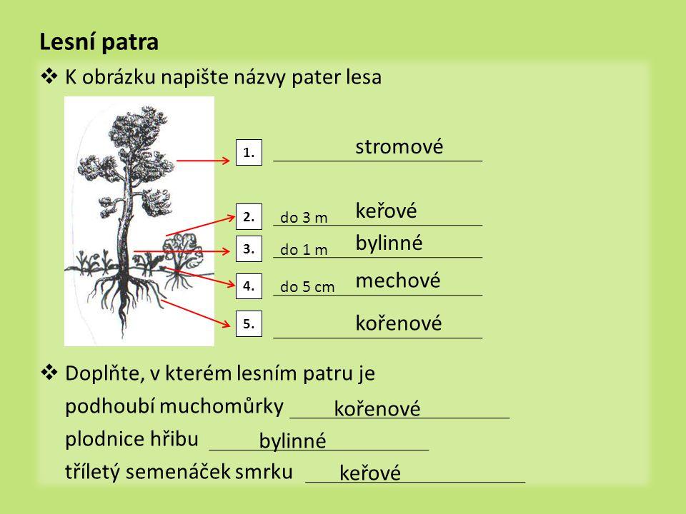 Lesní patra K obrázku napište názvy pater lesa stromové keřové