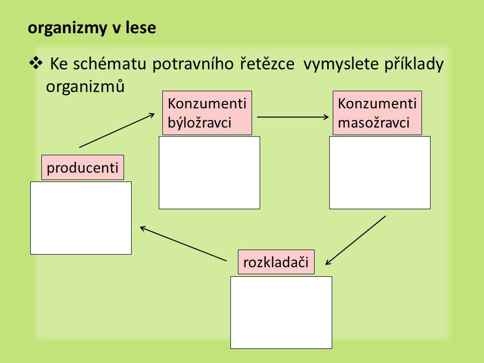 Ke schématu potravního řetězce vymyslete příklady organizmů
