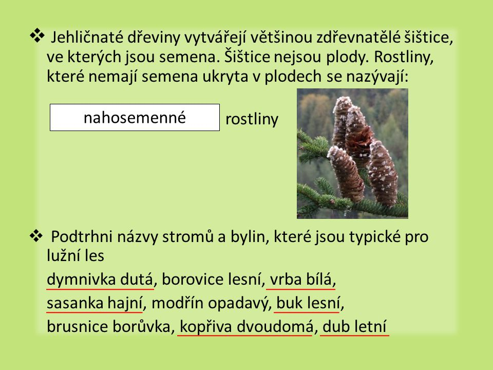 Jehličnaté dřeviny vytvářejí většinou zdřevnatělé šištice, ve kterých jsou semena. Šištice nejsou plody. Rostliny, které nemají semena ukryta v plodech se nazývají: