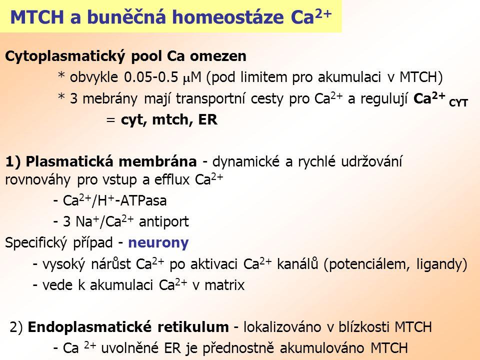 MTCH a buněčná homeostáze Ca2+