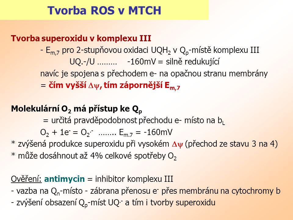 Tvorba ROS v MTCH Tvorba superoxidu v komplexu III