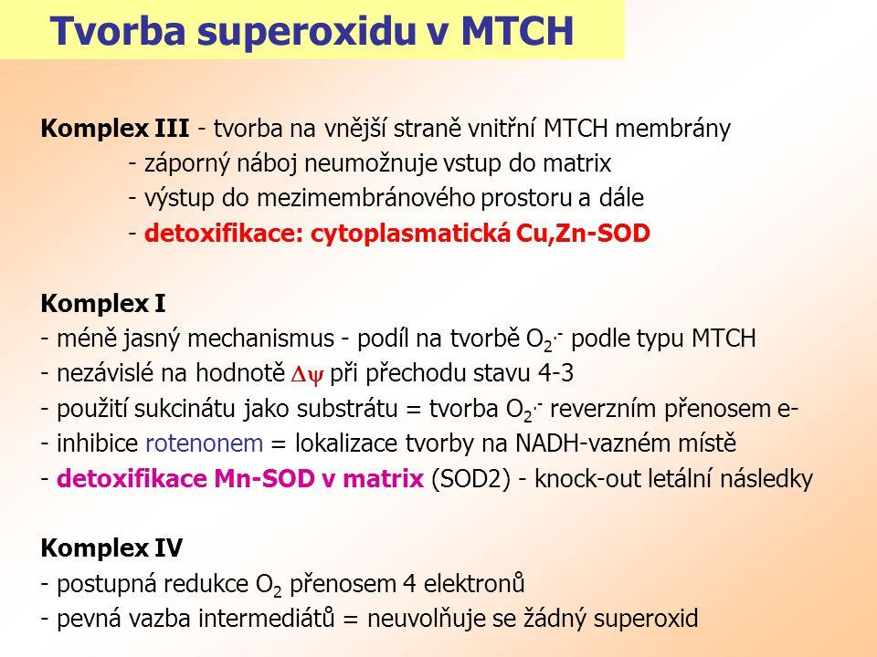 Tvorba superoxidu v MTCH