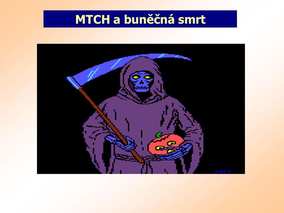 MTCH a buněčná smrt