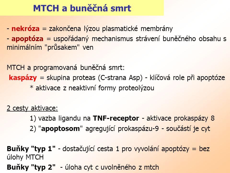 MTCH a buněčná smrt - nekróza = zakončena lýzou plasmatické membrány