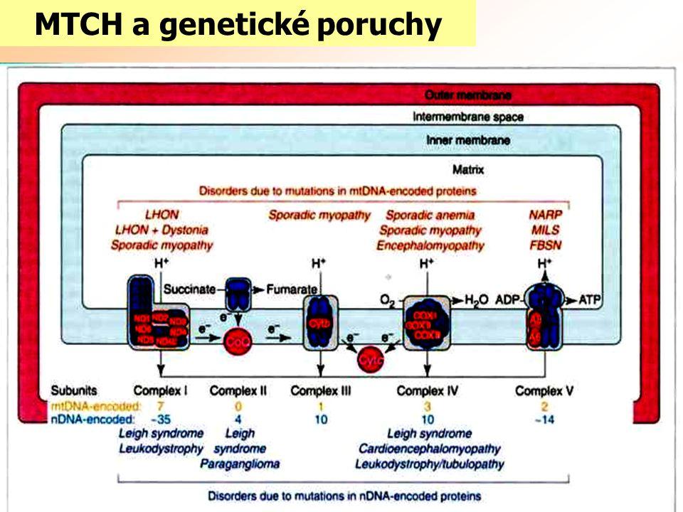 MTCH a genetické poruchy