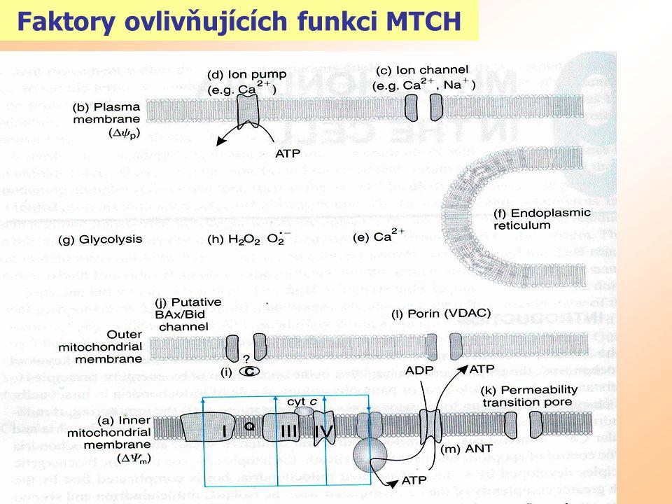 Faktory ovlivňujících funkci MTCH