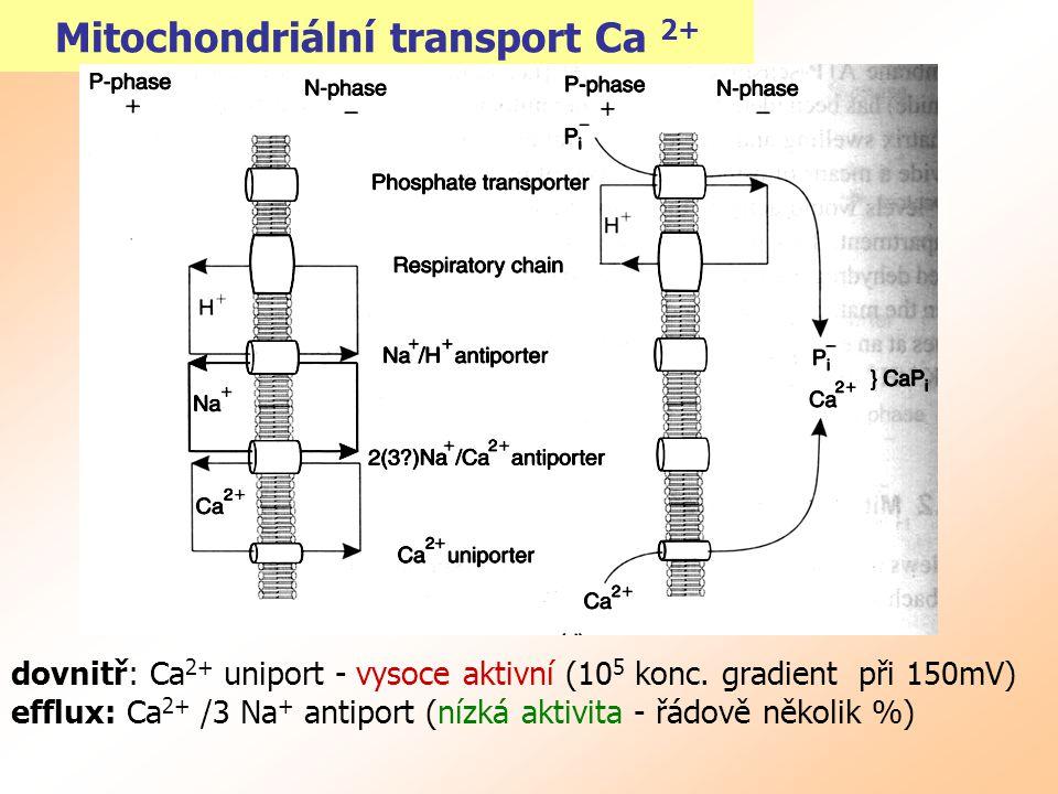 Mitochondriální transport Ca 2+