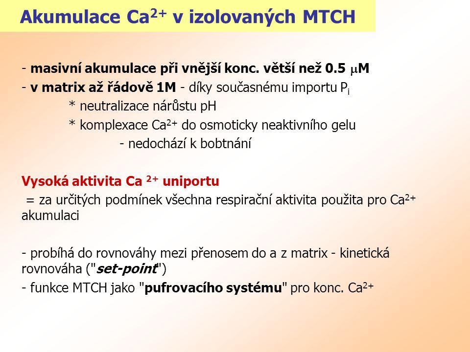Akumulace Ca2+ v izolovaných MTCH