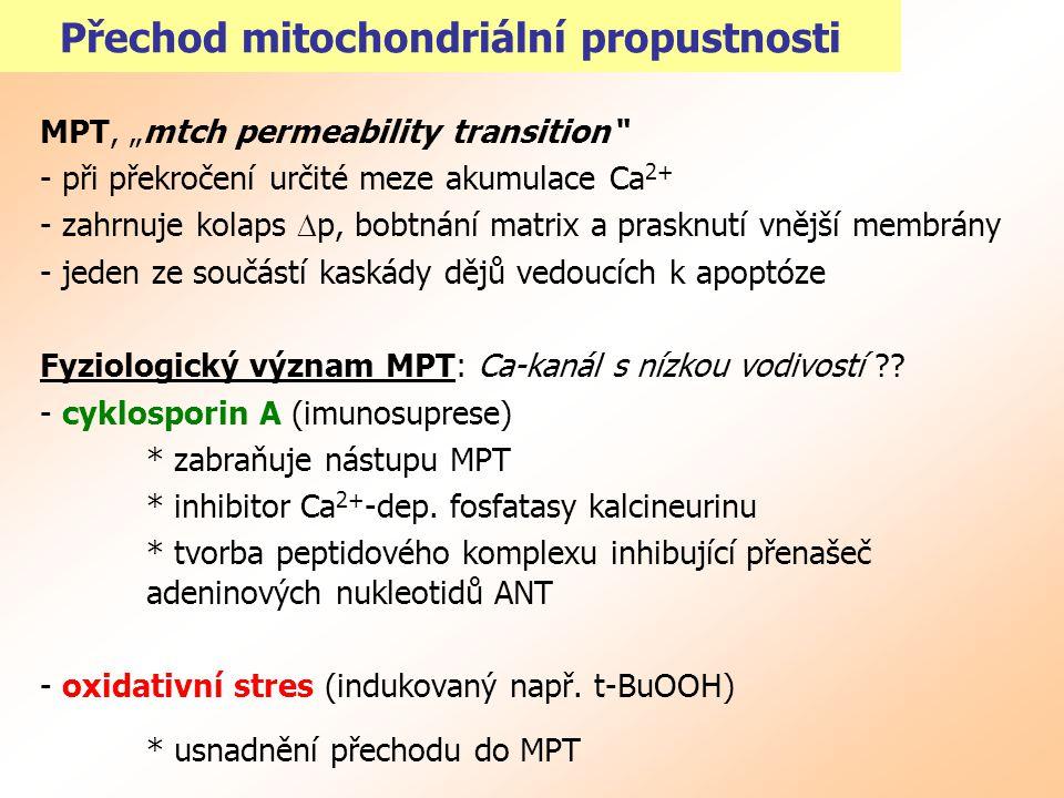 Přechod mitochondriální propustnosti