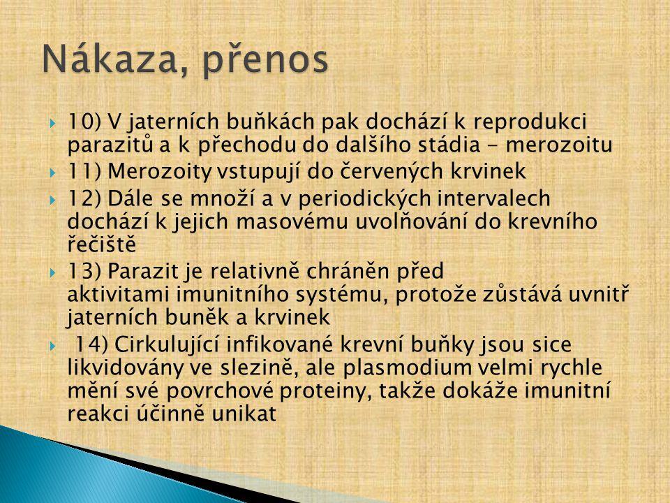 Nákaza, přenos 10) V jaterních buňkách pak dochází k reprodukci parazitů a k přechodu do dalšího stádia - merozoitu.
