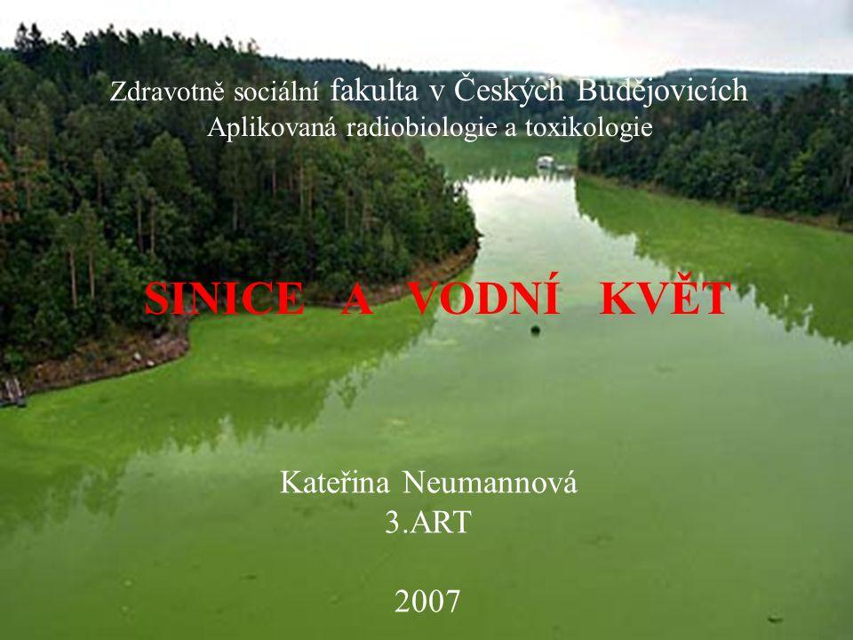 SINICE A VODNÍ KVĚT Kateřina Neumannová 3.ART 2007