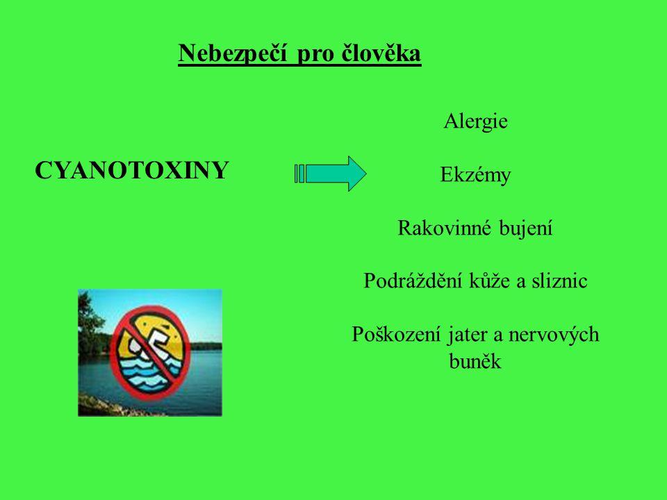 Nebezpečí pro člověka CYANOTOXINY Alergie Ekzémy Rakovinné bujení