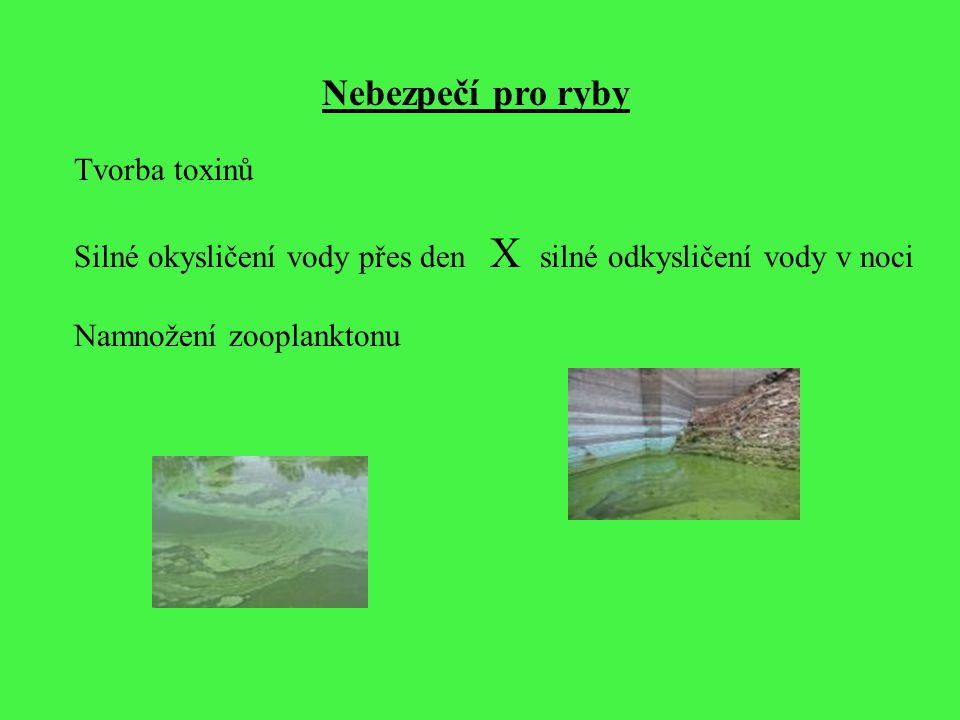 Nebezpečí pro ryby Tvorba toxinů